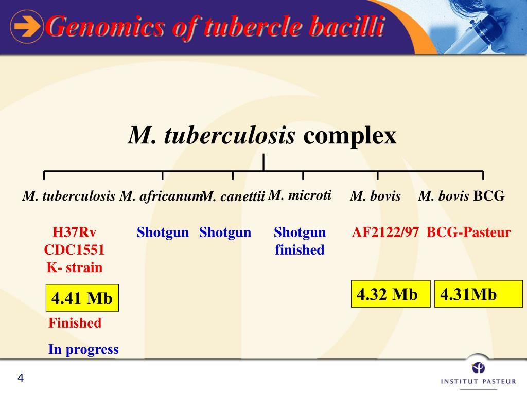 Genomics of tubercle bacilli