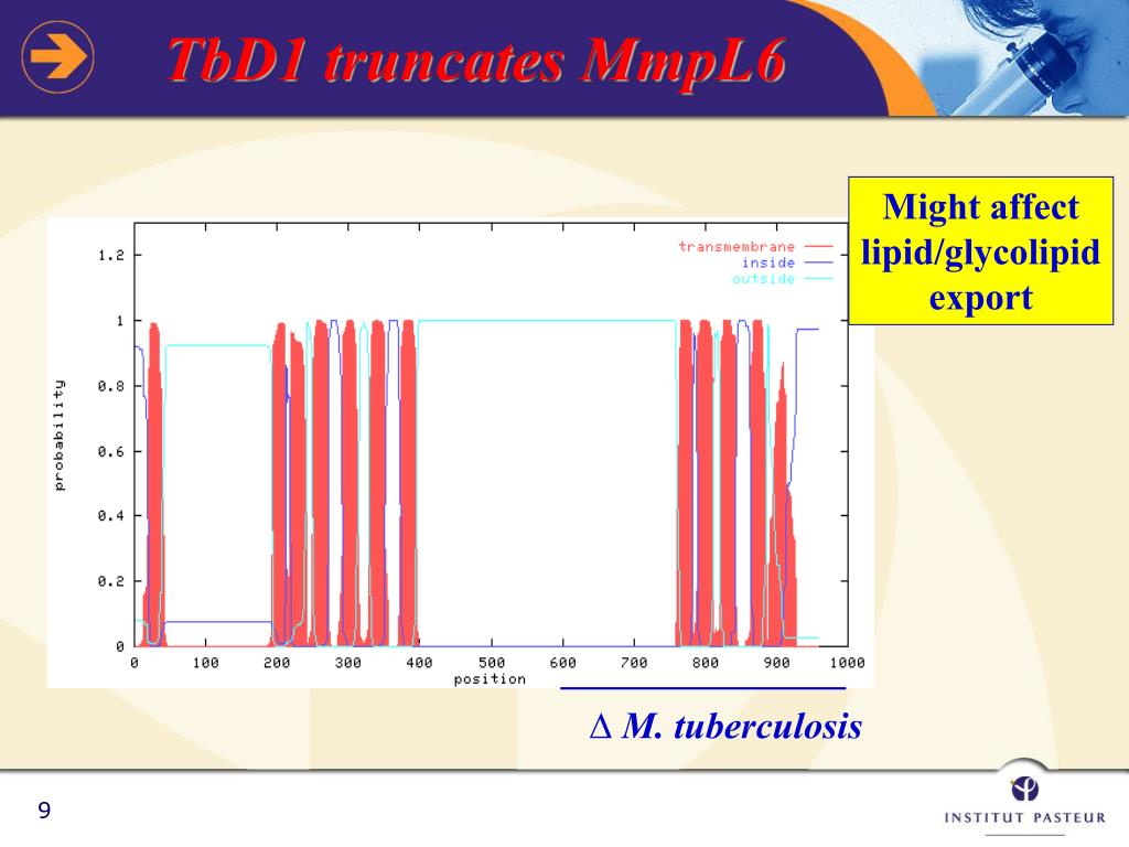 TbD1 truncates MmpL6