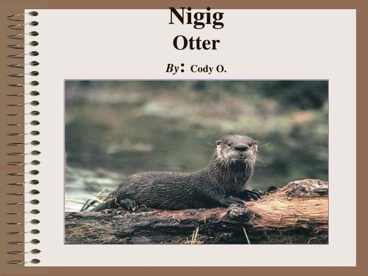 Nigig otter by cody o