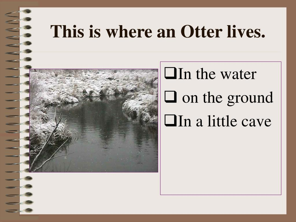 This is where an Otter lives.