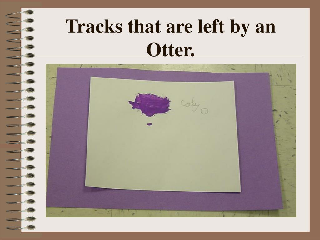 Tracks that are left by an Otter.