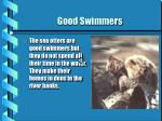 good swimmers