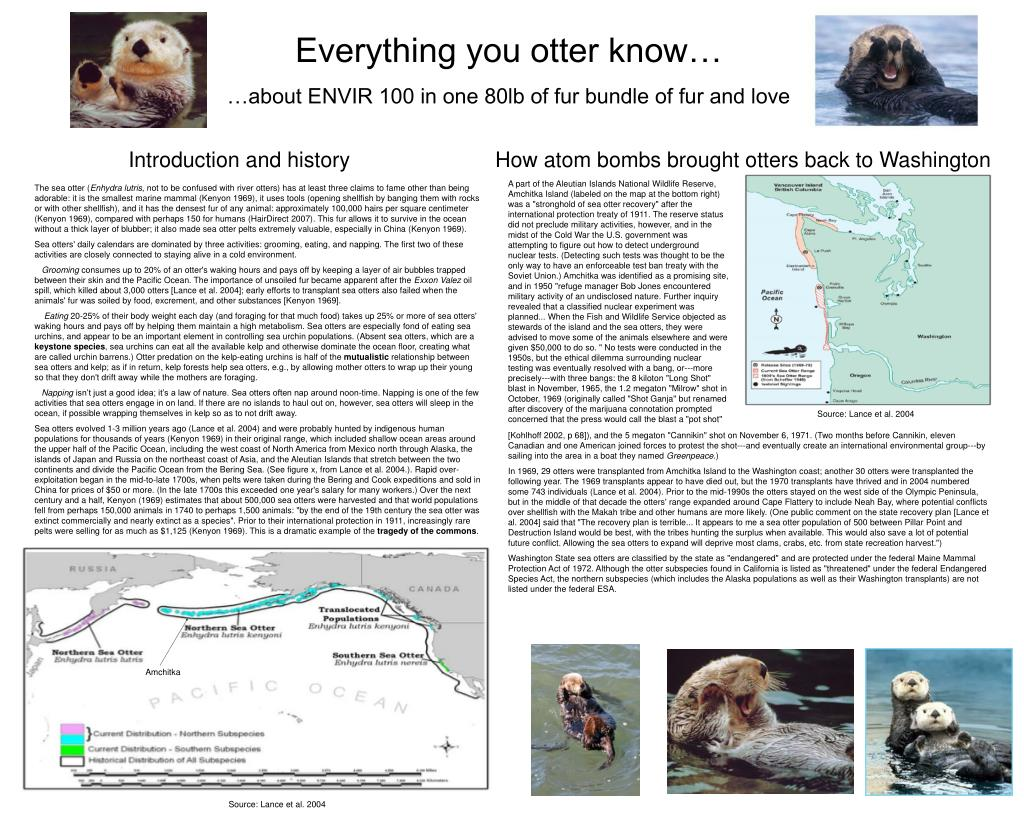 Everything you otter know…