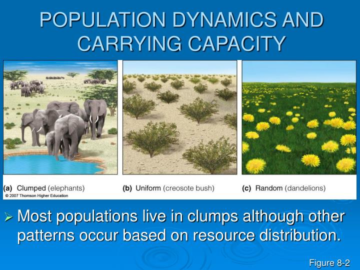 Population dynamics and carrying capacity l.jpg