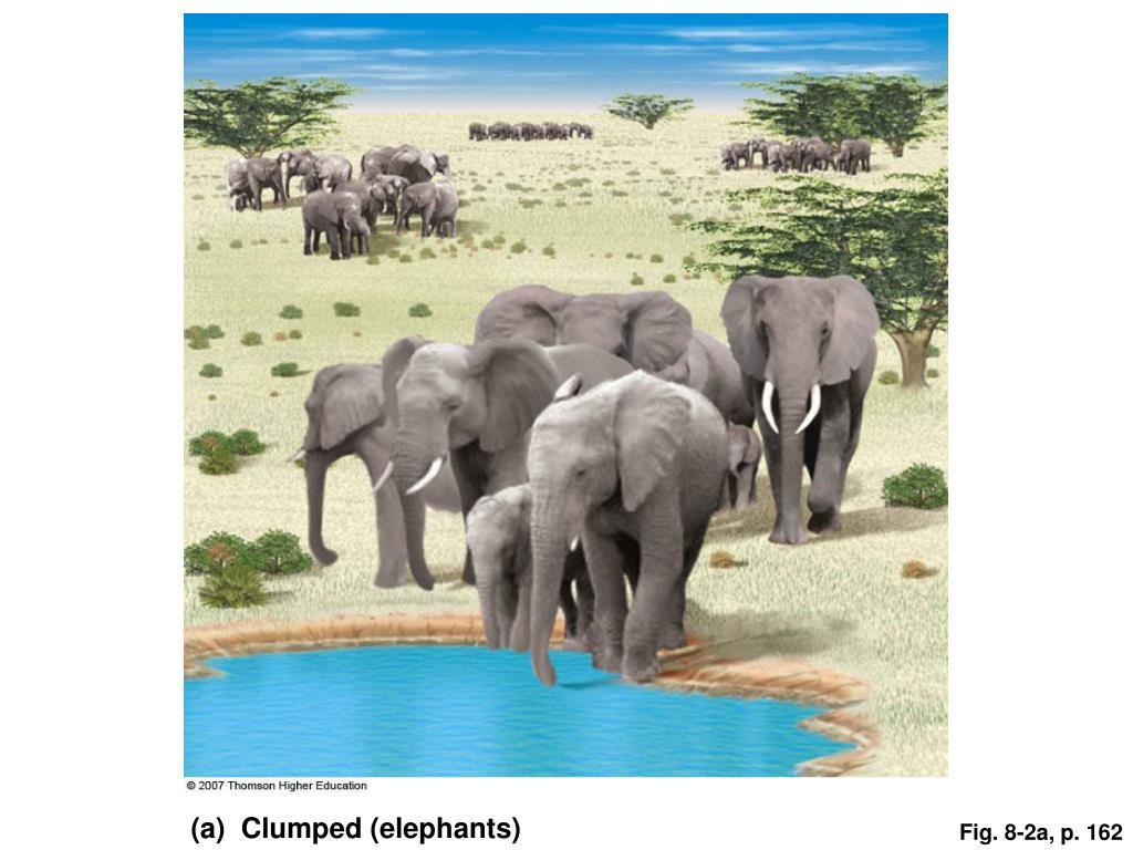 (a)  Clumped (elephants)