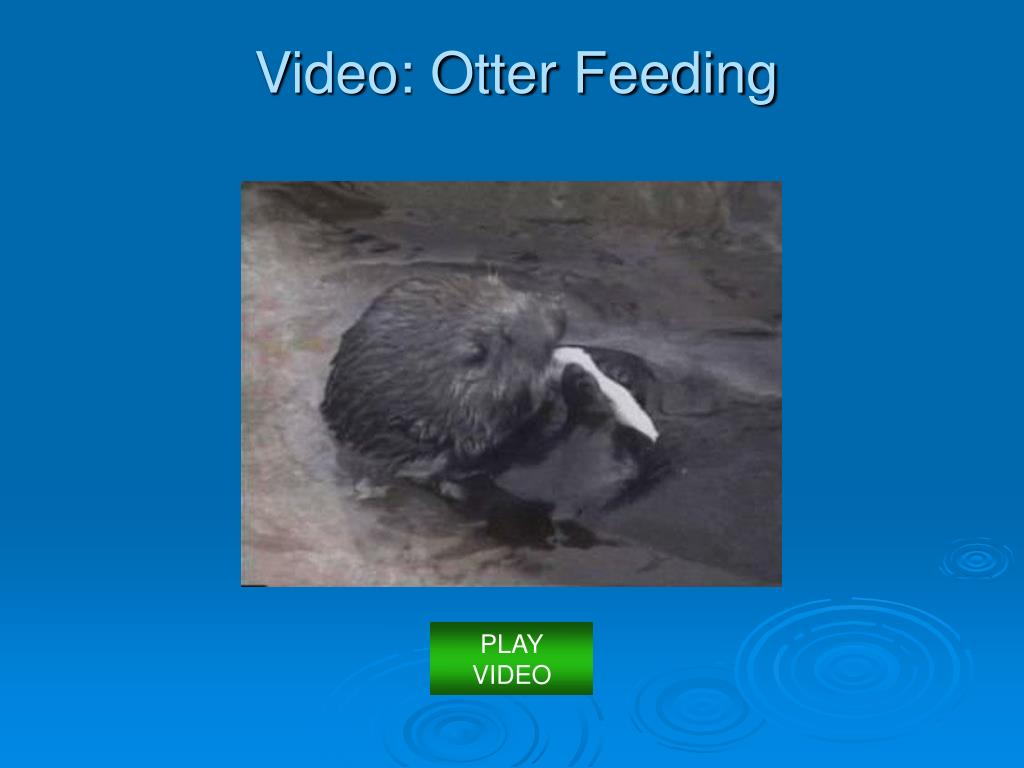 Video: Otter Feeding