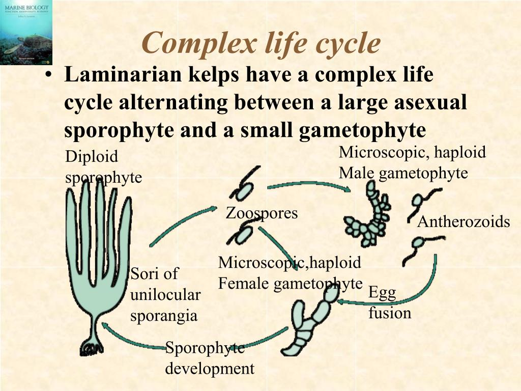 Complex life cycle