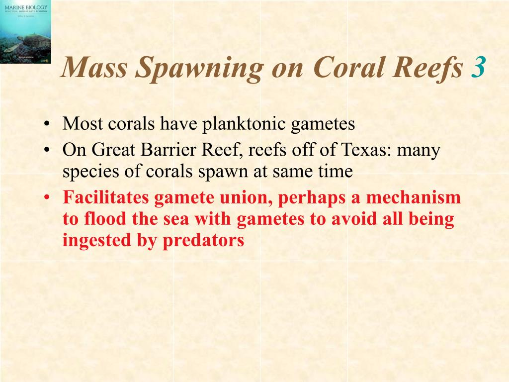 Mass Spawning on Coral Reefs