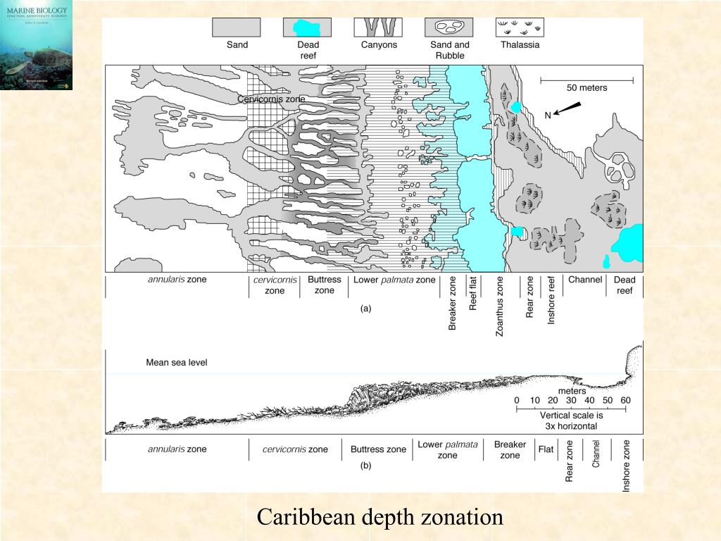 Caribbean depth zonation