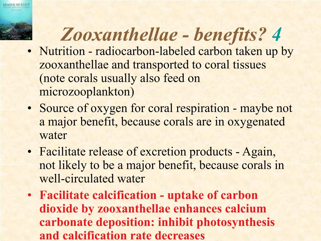 Zooxanthellae - benefits?