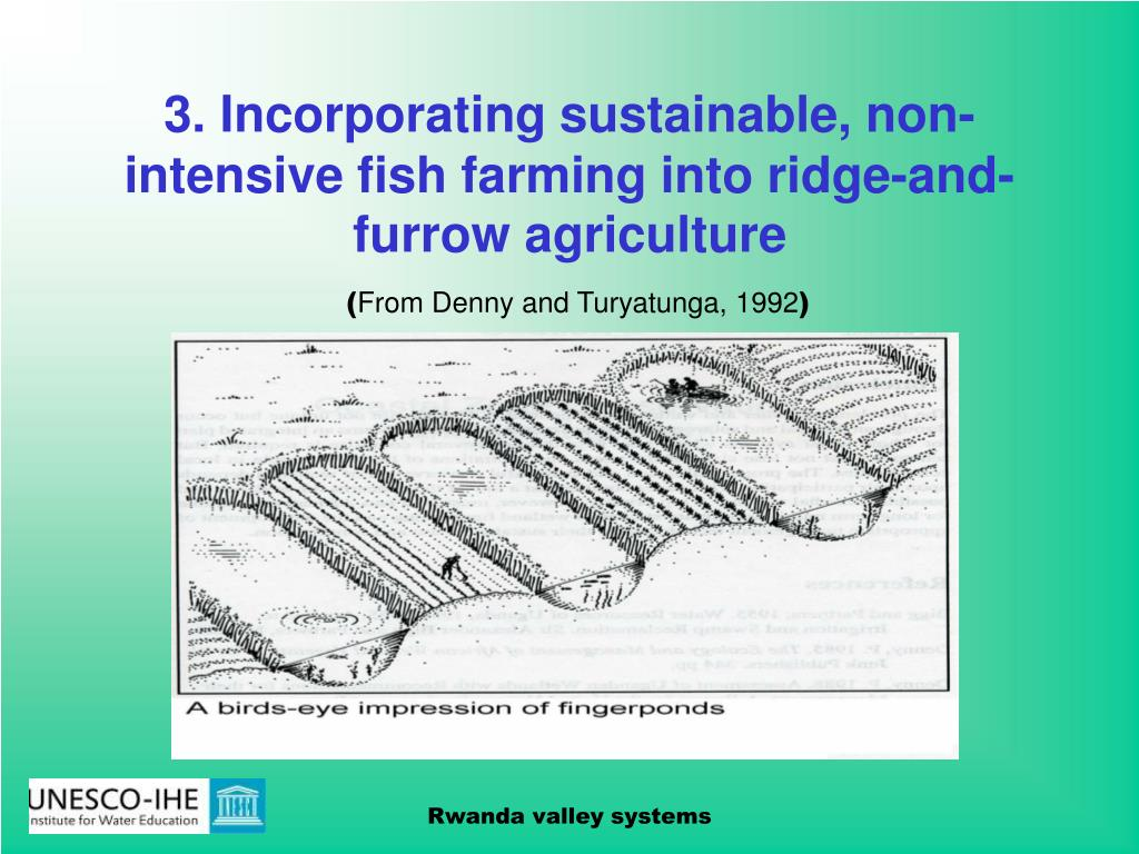 3. Incorporating sustainable, non-intensive fish farming into ridge-and-furrow agriculture
