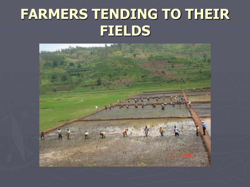 FARMERS TENDING TO THEIR FIELDS