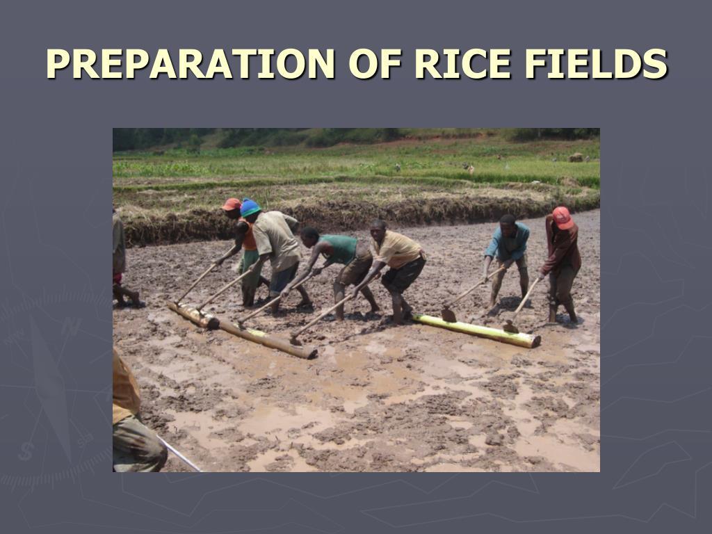 PREPARATION OF RICE FIELDS