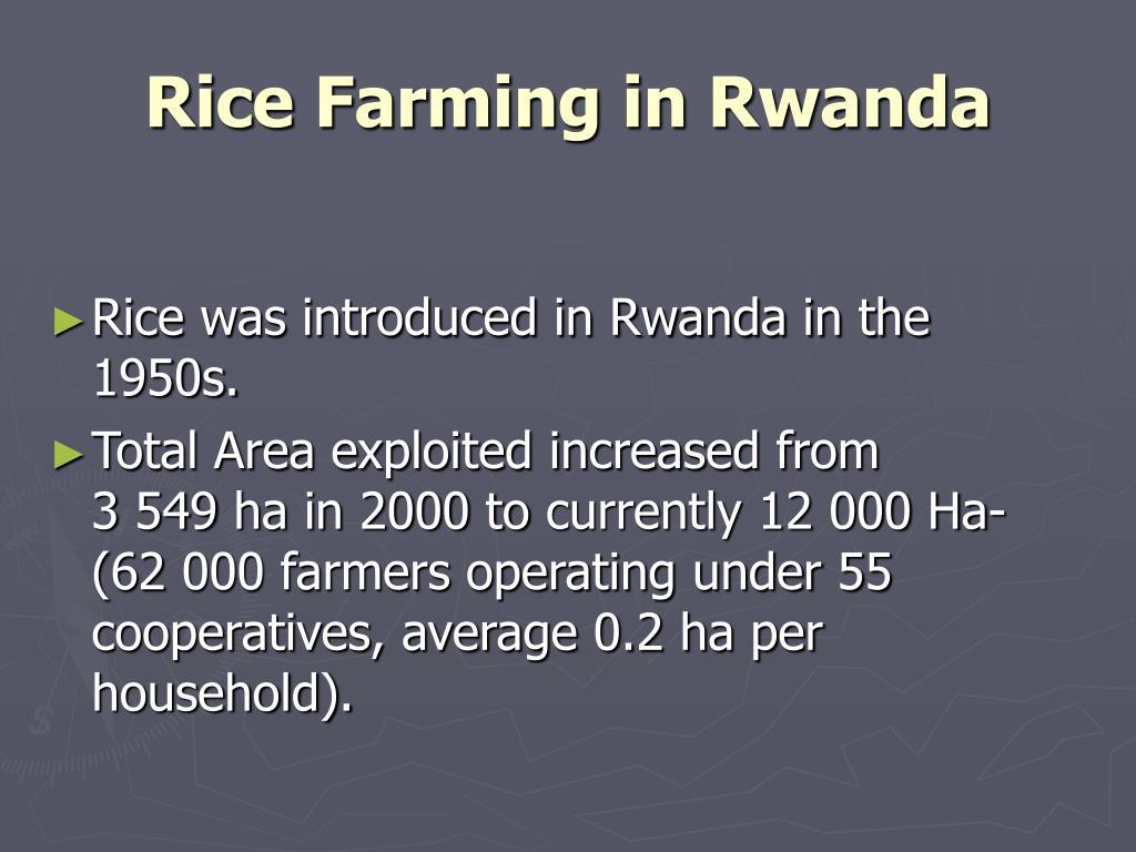 Rice Farming in Rwanda