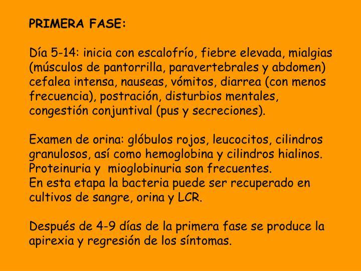 PRIMERA FASE: