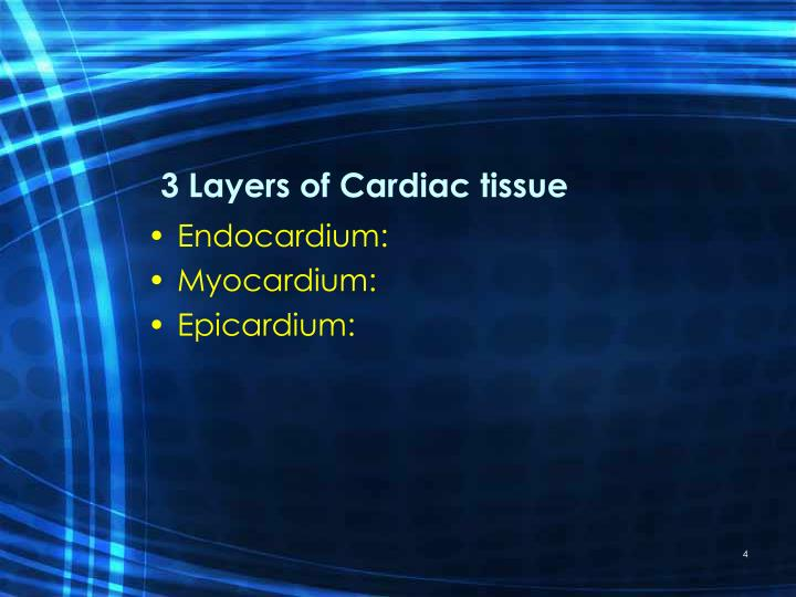 3 Layers of Cardiac tissue
