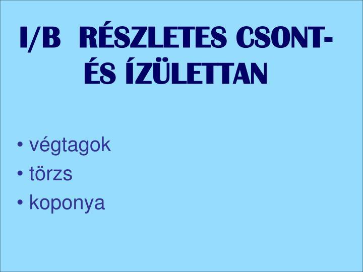 I/B  RÉSZLETES CSONT-ÉS ÍZÜLETTAN