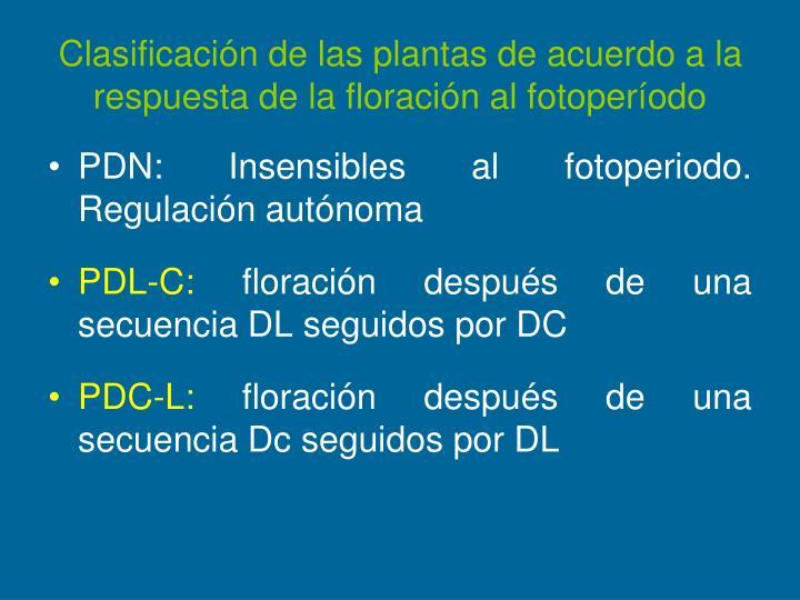 Clasificación de las plantas de acuerdo a la respuesta de la floración al fotoperíodo