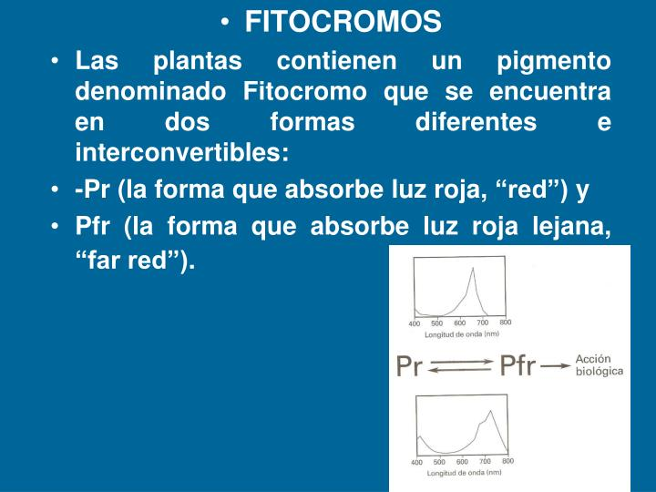 FITOCROMOS