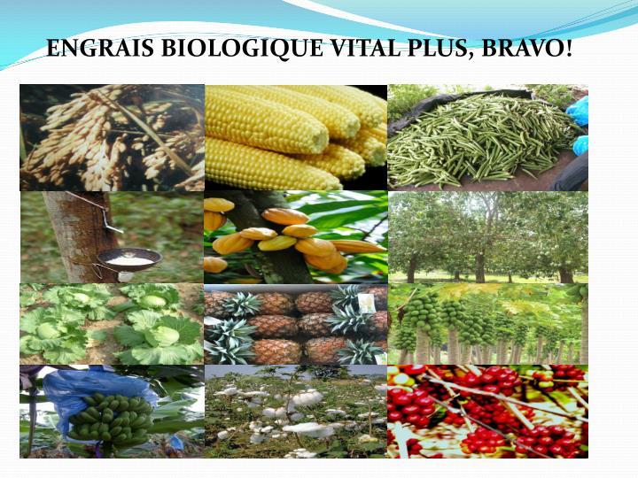 ENGRAIS BIOLOGIQUE VITAL PLUS, BRAVO!