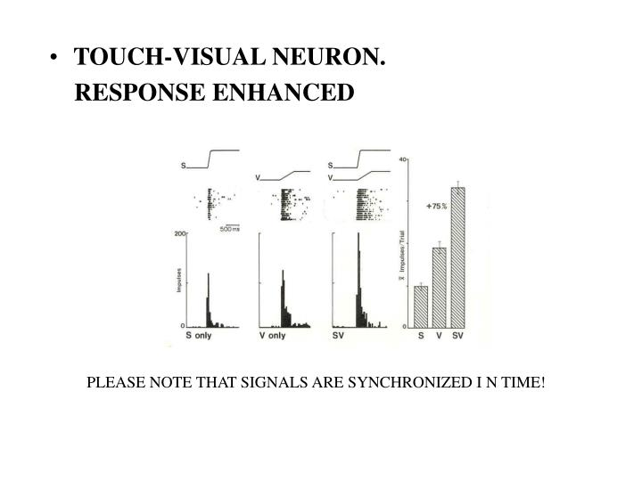 TOUCH-VISUAL NEURON.