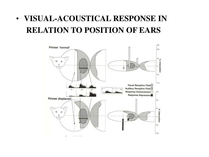 VISUAL-ACOUSTICAL RESPONSE IN