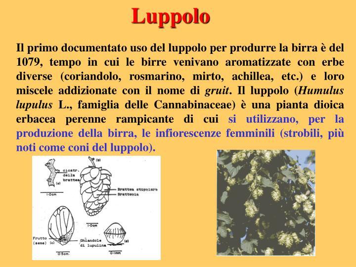 Luppolo