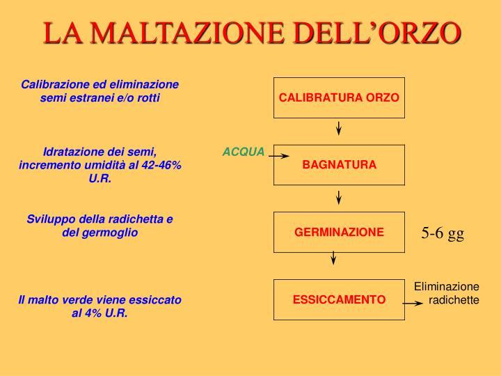 LA MALTAZIONE DELL'ORZO