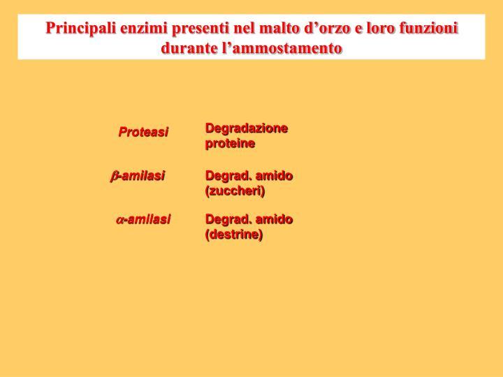 Principali enzimi presenti nel malto d'orzo e loro funzioni durante l'ammostamento