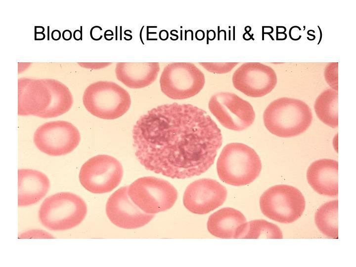 Blood Cells (Eosinophil & RBC's)