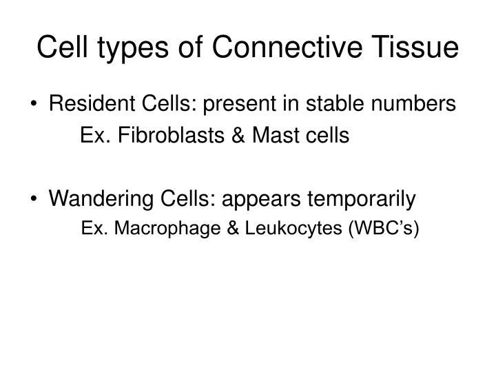 Cell types of Connective Tissue