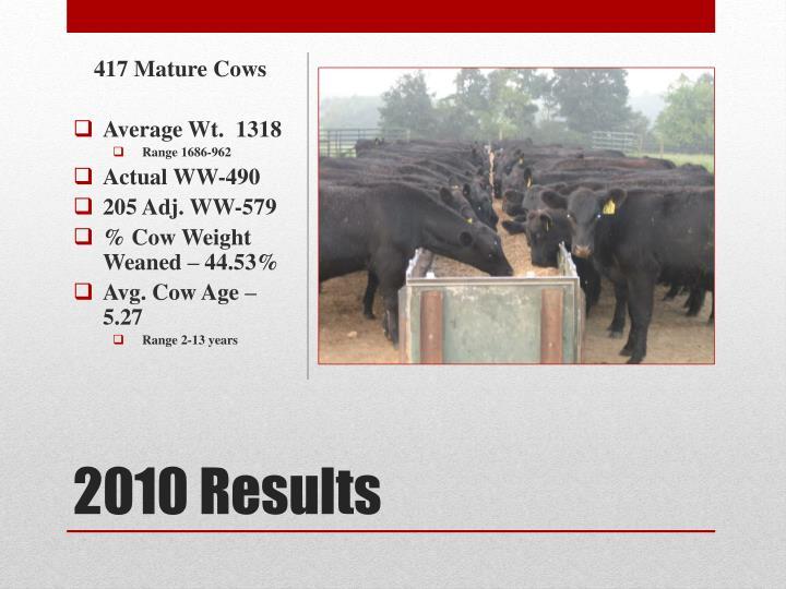 417 Mature Cows