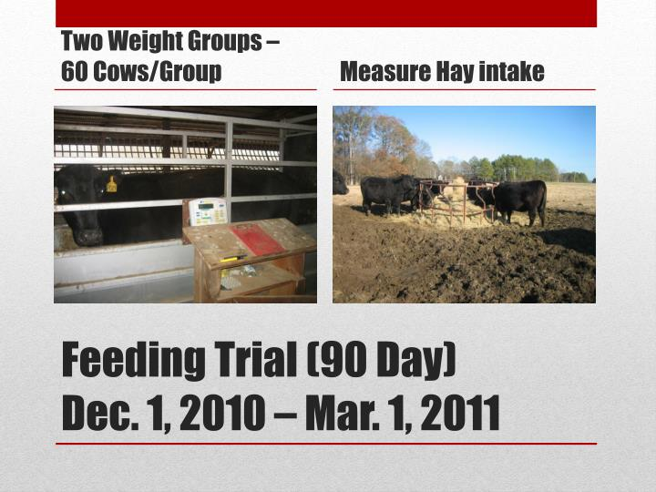 Two Weight Groups – 60 Cows/Group