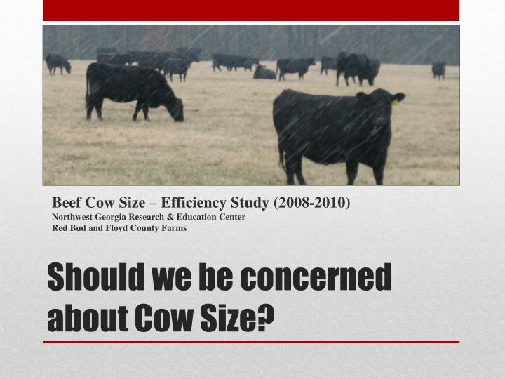 Beef Cow Size – Efficiency Study (2008-2010)