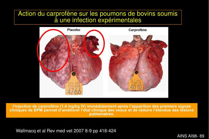 Action du carprofène sur les poumons de bovins soumis à une infection expérimentales