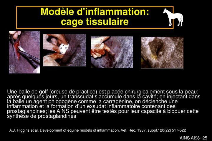 Modèle d'inflammation: