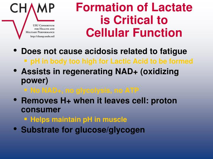 Formation of Lactate