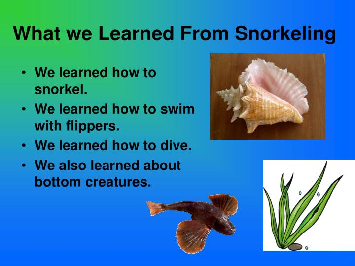 What we Learned From Snorkeling