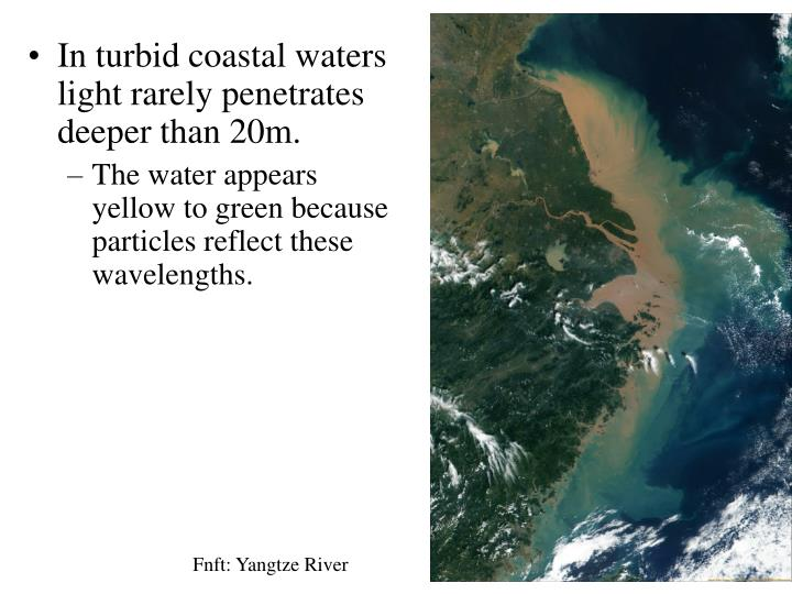 In turbid coastal waters light rarely penetrates deeper than 20m.