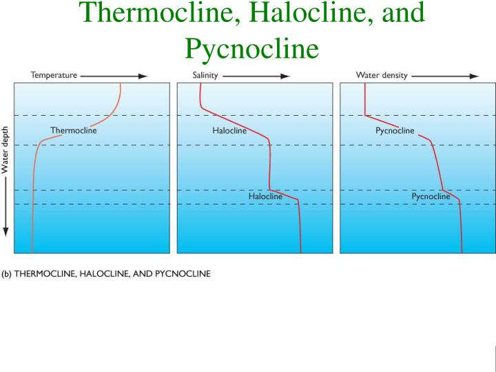 Thermocline, Halocline, and Pycnocline