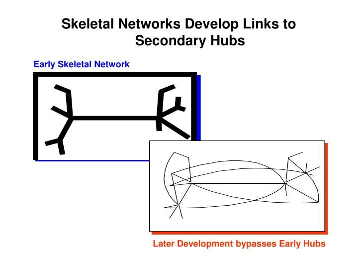 Skeletal Networks Develop Links to