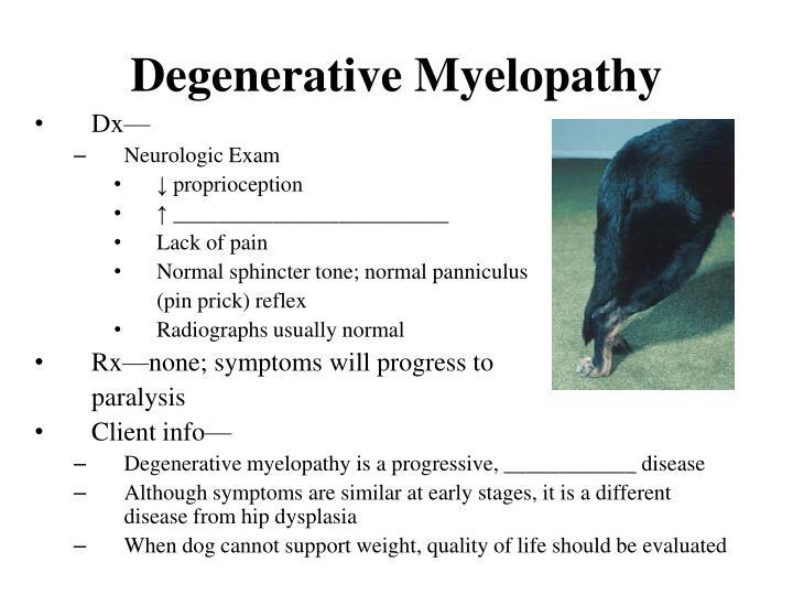 Degenerative Myelopathy