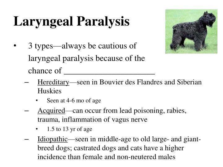 Laryngeal Paralysis