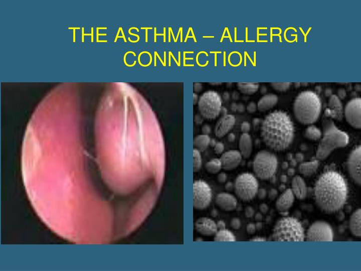 THE ASTHMA – ALLERGY CONNECTION