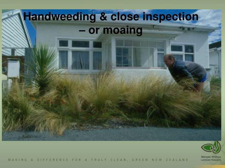 Handweeding & close inspection – or moaing