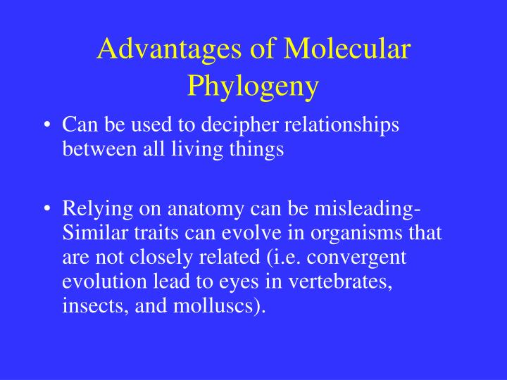 Advantages of Molecular Phylogeny