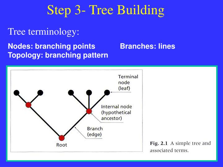 Step 3- Tree Building