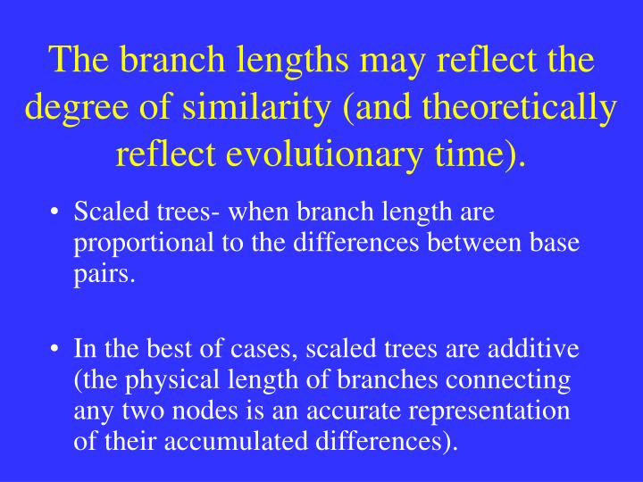The branch lengths may reflect the degree of similarity (and theoretically reflect evolutionary time).