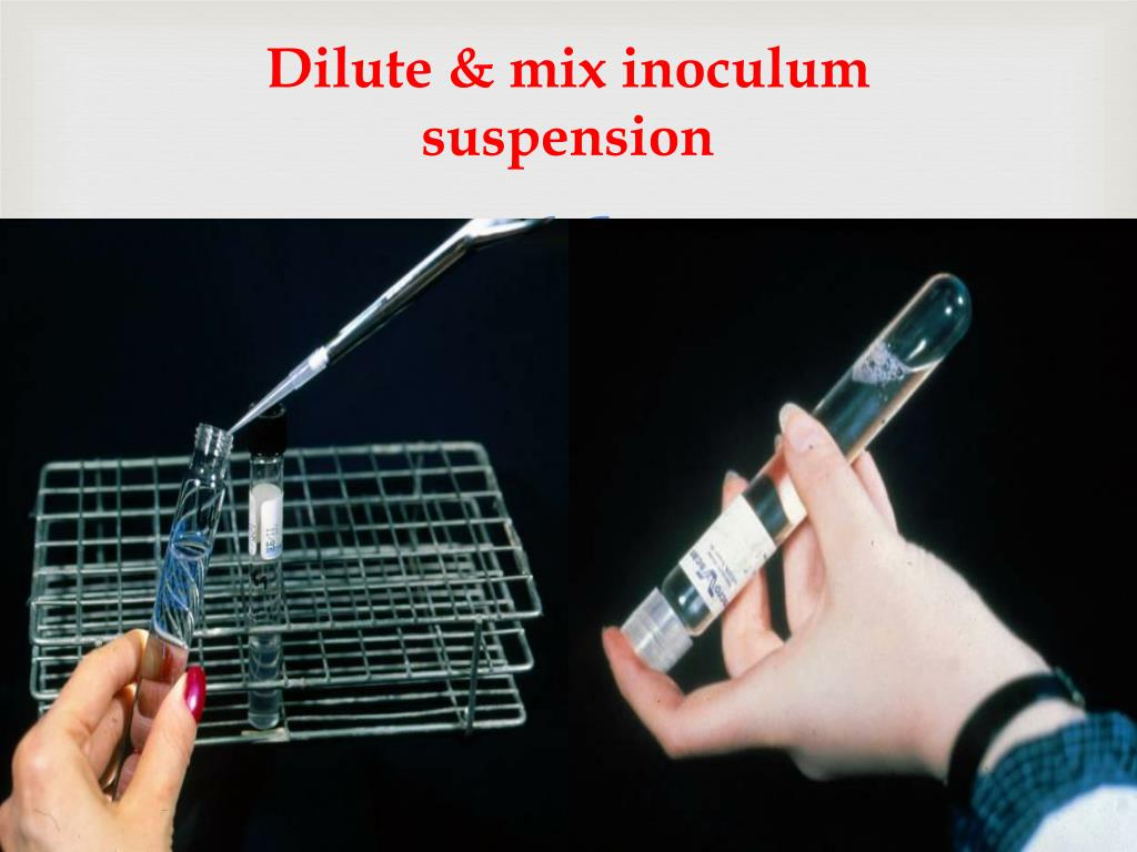 Dilute & mix inoculum