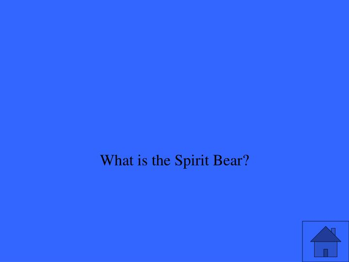 What is the Spirit Bear?
